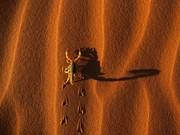Песок,  1-ый класс,  модуль крупности 2, 4.тел.80336080080.