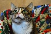 Кошка с глазами-изумрудами
