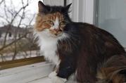 Невероятно обаятельная молодая кошечка Марусенька ищет дом