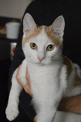 Кот в дар. Лексус