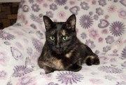 Особенная кошка Румба в хорошие руки